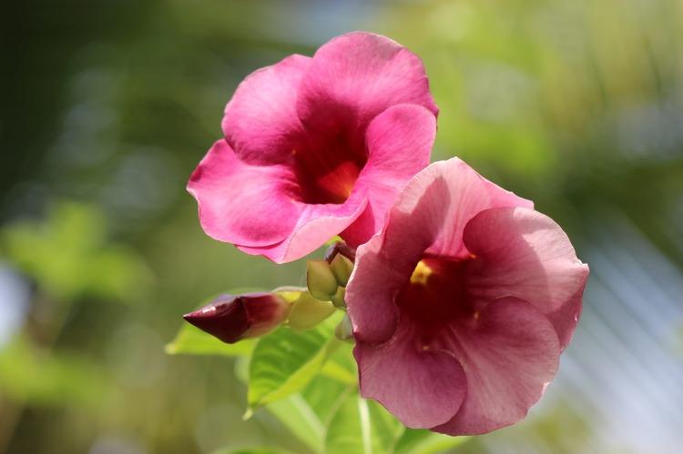 flower-3100338_1280.jpg